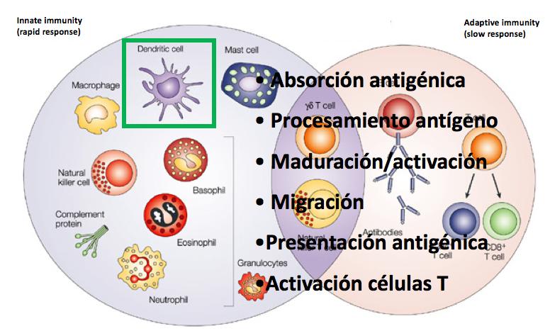 Terapia Antígeno Específica con células dendríticas