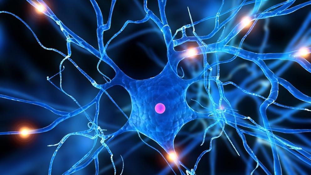 Colesterol de la mielina impide la reparación neuronal en la EM